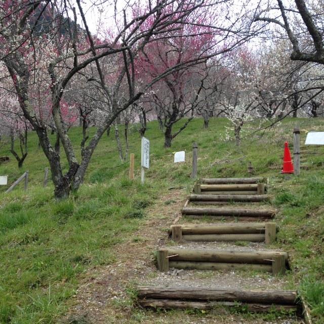 木下沢梅林_散策路階段